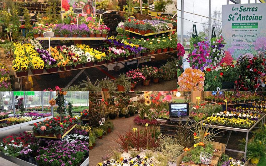 P pini res horticulteur melgven concarneau for Entretien jardin concarneau