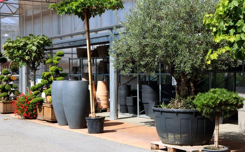 Jardinerie p pini re horticulteur melgven rosporden pont for Jardinerie plantes