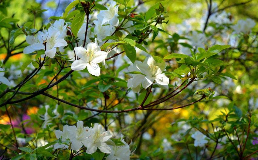 Jardinerie p pini re horticulteur melgven rosporden pont for Vente arbuste